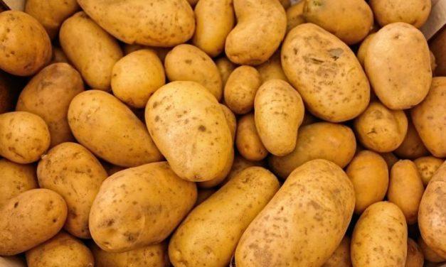 Starting Potato Farming Business Plan (PDF)