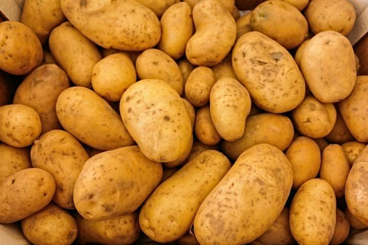 Starting Potato Farming Business Plan (PDF)