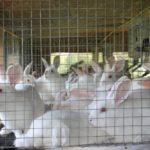Starting Rabbit Farming Business Plan (PDF): Raising Rabbits For Meat